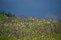Primavera a la orilla del pantano de Zufre